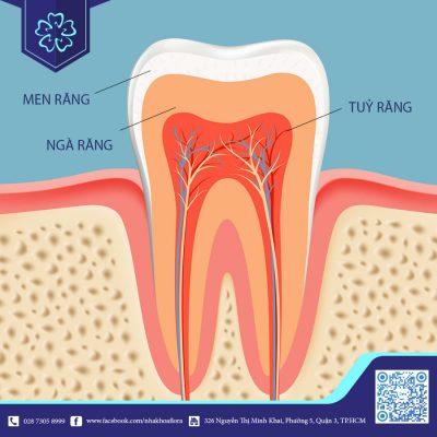 Cấu trúc răng