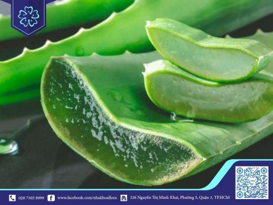 Lô hội có tác dụng giảm cơn đau răng an toàn (ảnh minh họa)